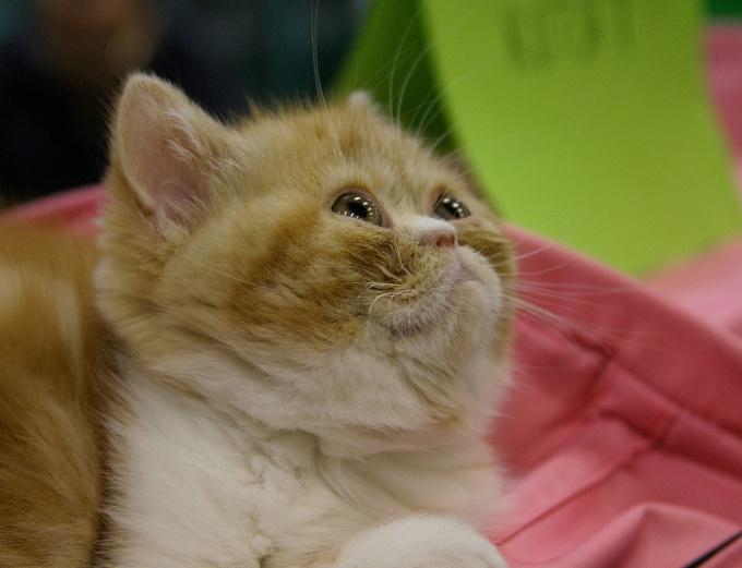 как узнать есть глисты у маленькой кошки?живот надулся сильно