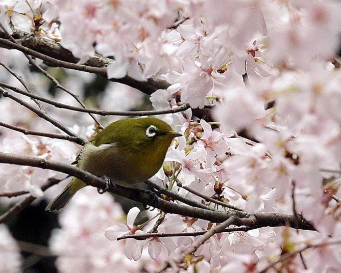 Как сорвать ветку, чтобы не спугнуть птицу