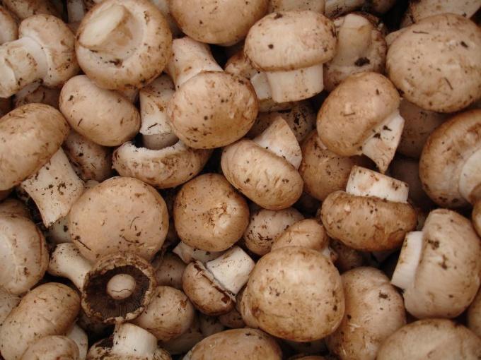 Как морозить грибы