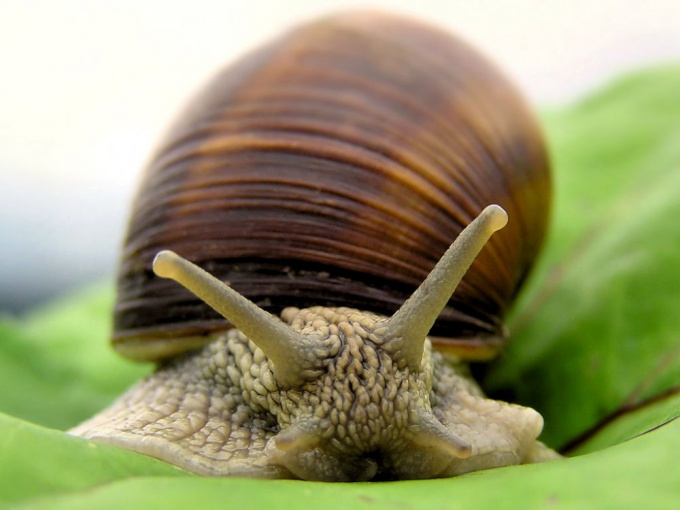How to call a snail