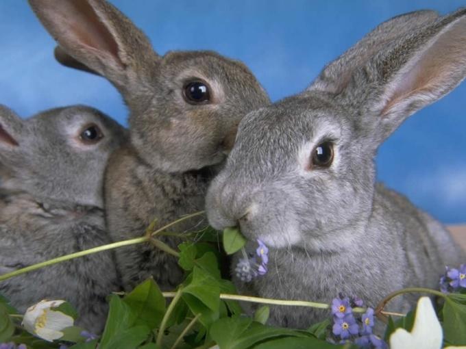 Как отличить зайца от кролика