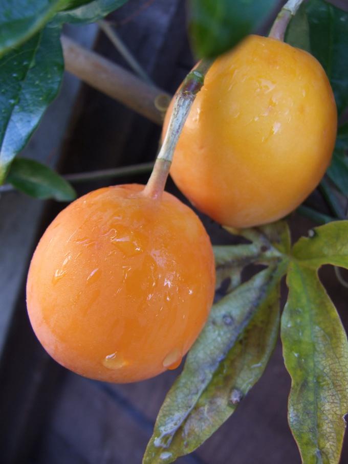 Как очистить апельсин