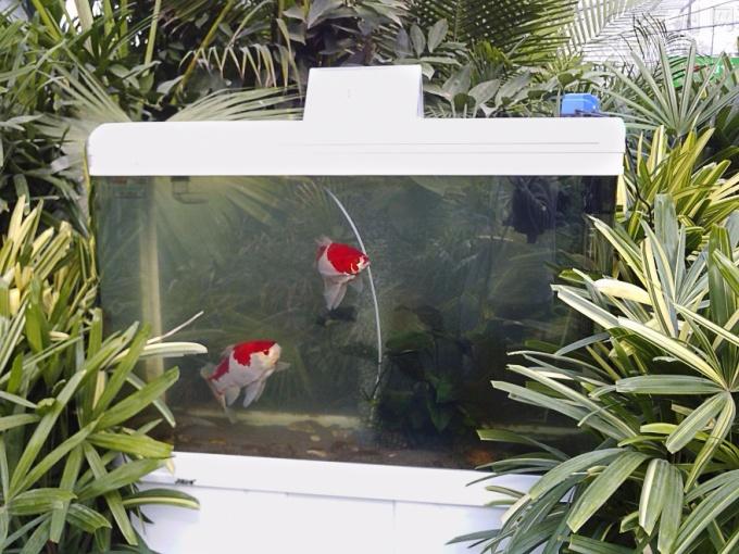 Как сделать внешний фильтр для аквариума