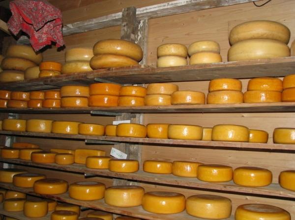 Как сушить сыр
