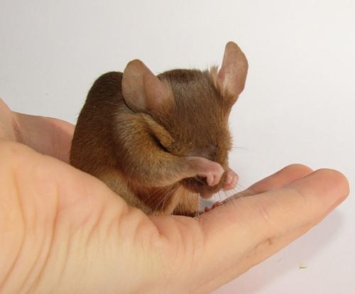 Как назвать мышку