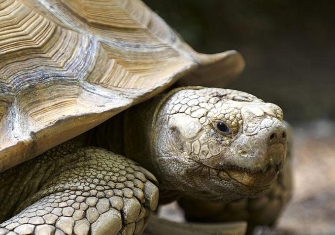 как разбудить сухопутную черепаху после зимней спячки