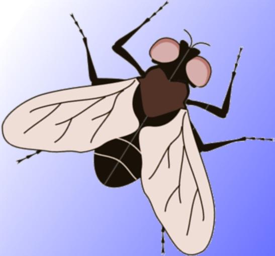 Как поймать муху