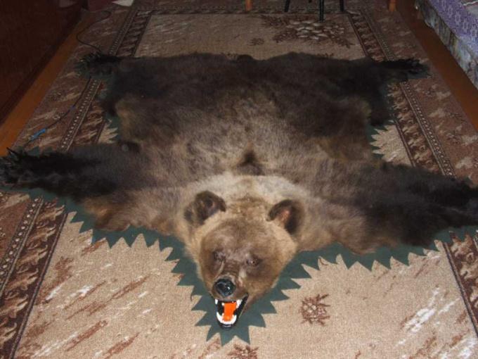 Как выделать шкуру медведя