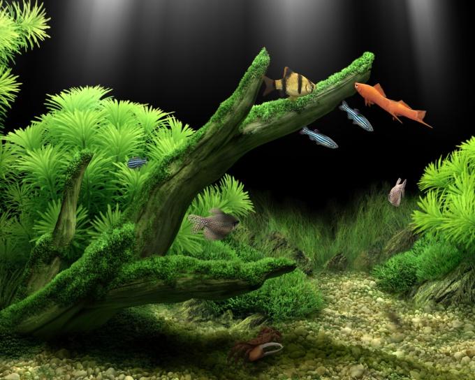 как избавиться от зеленых водорослей в аквариуме