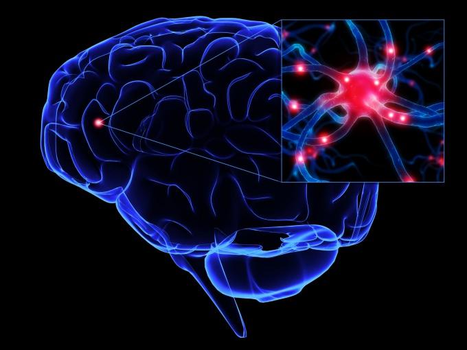 """Как """"накачать"""" мозг"""