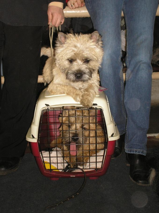 как провезти собаку в самолете