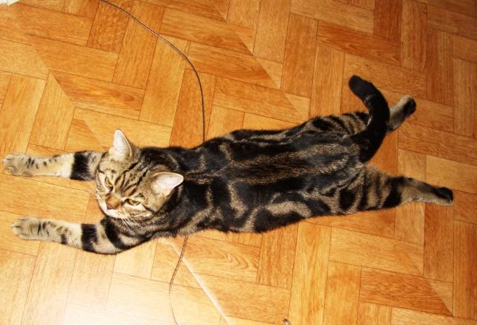 цистит у котёнка