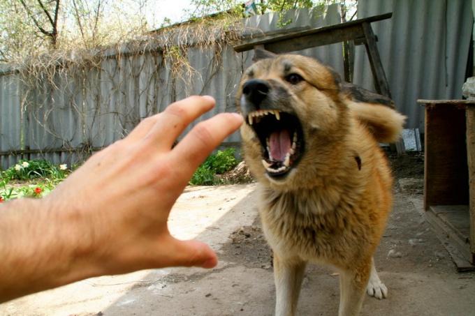 игра спастись собаку на улице