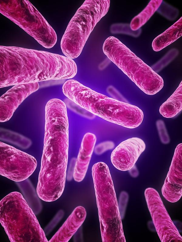 Как вырастить бактерии