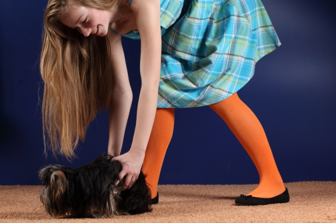 как тренировать 5-и месячную собаку