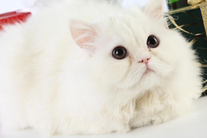 как лечить кошку обьевшуюся своей шерсти