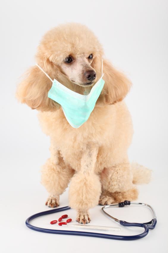 у собаки срезана кожица на грудке как лечить рану