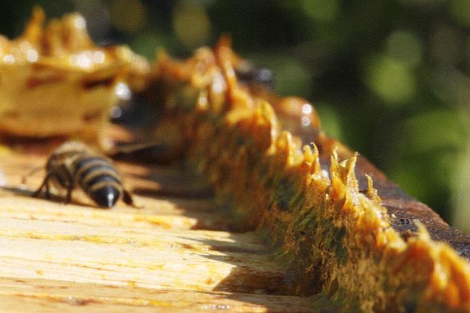 Как приготовить водный раствор прополиса