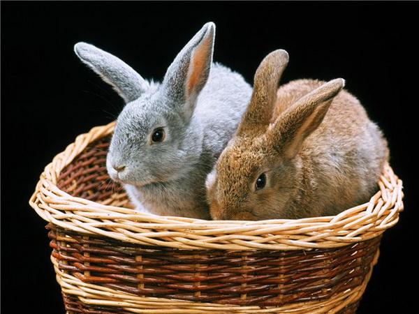 Как завести кроликов