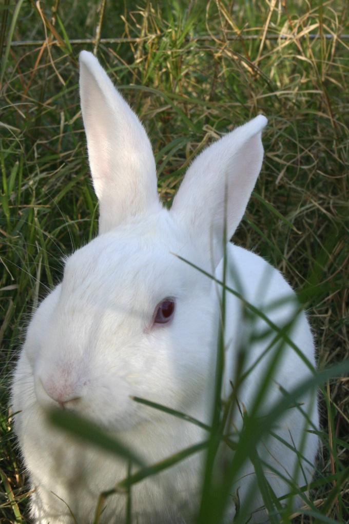 Как купать кролика
