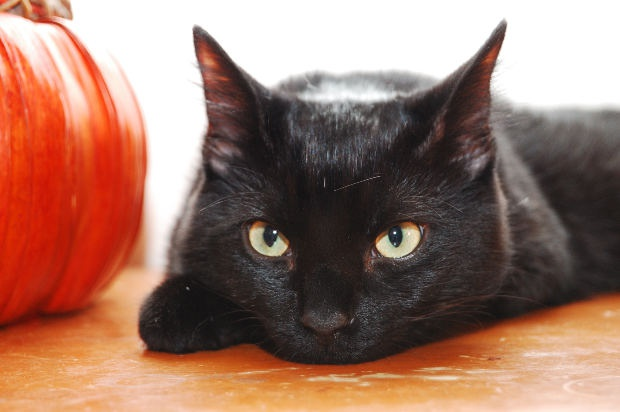 как узнать какая порода у кота