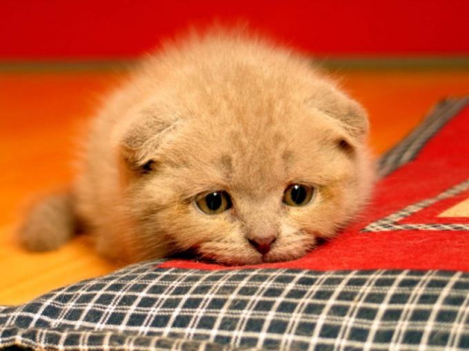 Как лечить понос у кота