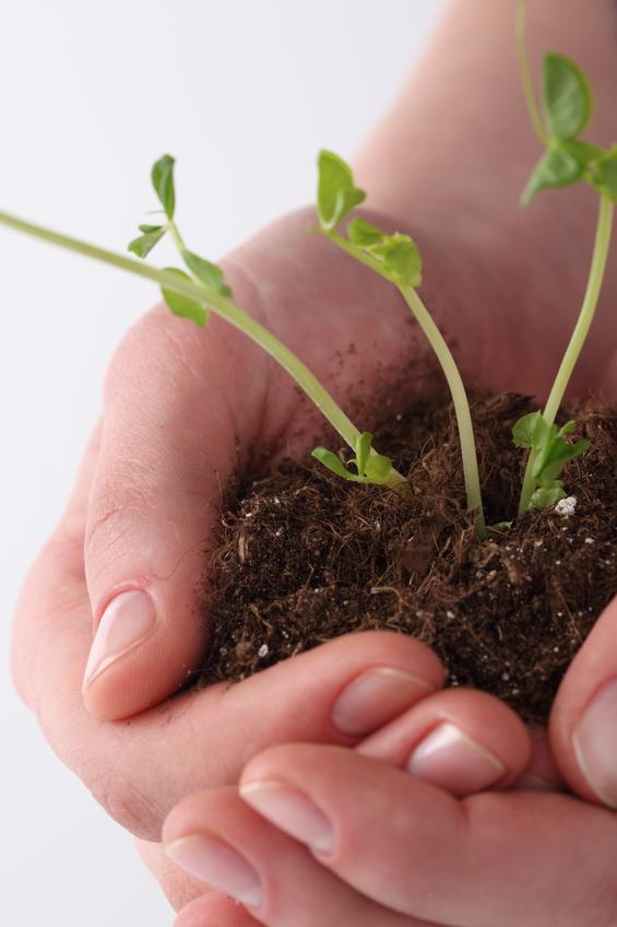 Как ускорить рост растений