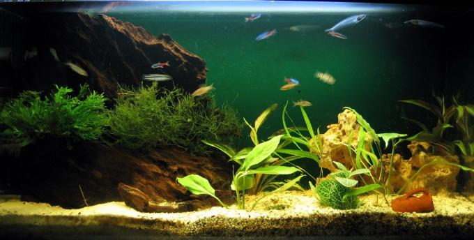 Как построить аквариум