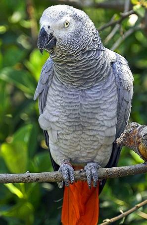 кличка попугаю