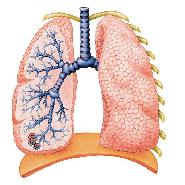 Как очистить лёгкие от пыли