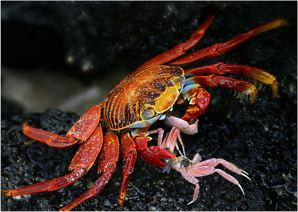 How to catch a crab