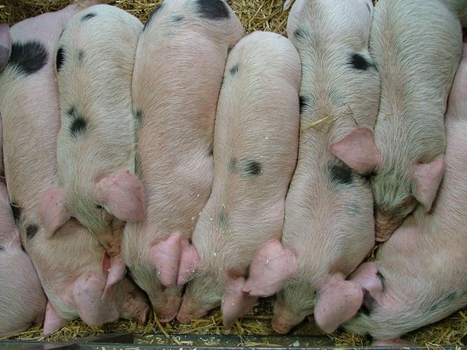 как зделать домик свиньям
