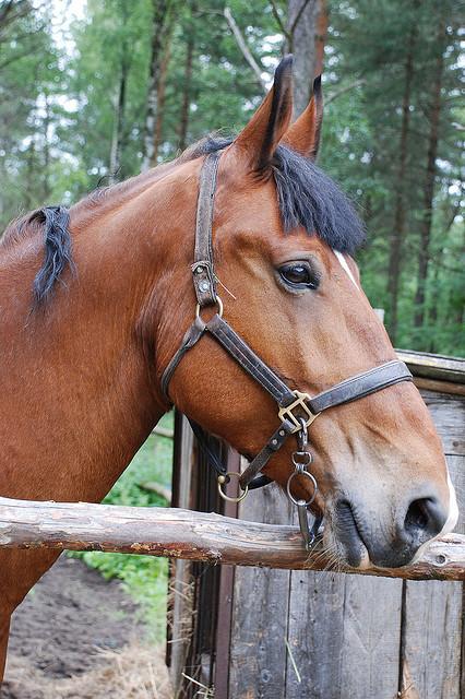 содержать лошадь