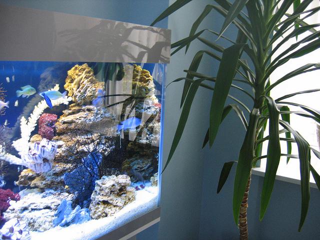 как сделать фильтр для аквариума