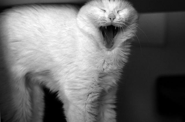 избавиться от сильной линьки у кошек