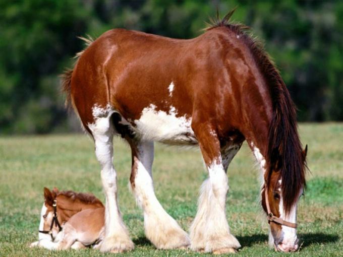 Как завести лошадь