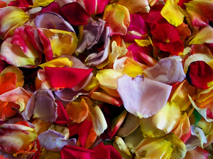 How to keep rose petals