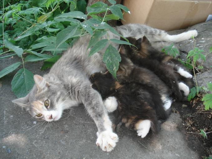 как научить кошку вставать на задние и подовать пиреднюю лапу