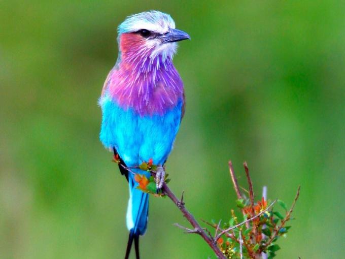 Как назвать птичку