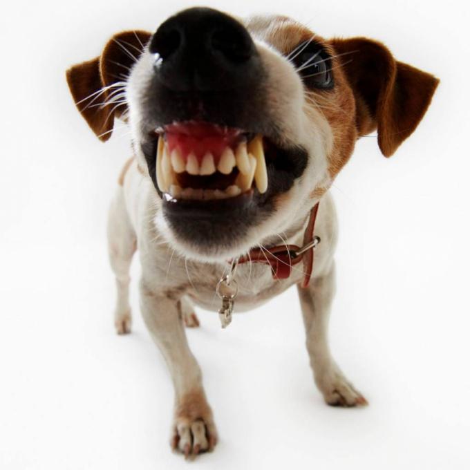 как отбиться от собак