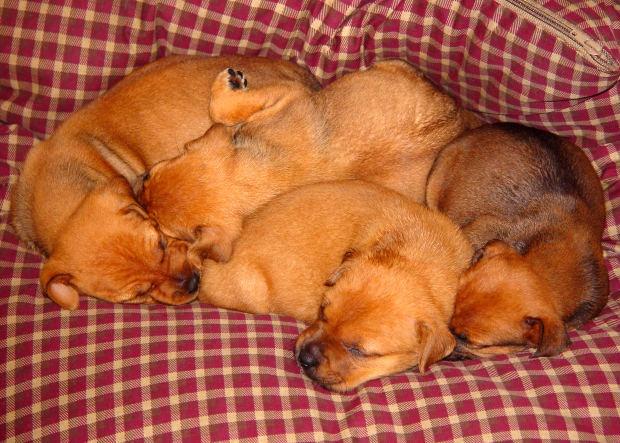 как сделать кровать своими руками для щенка