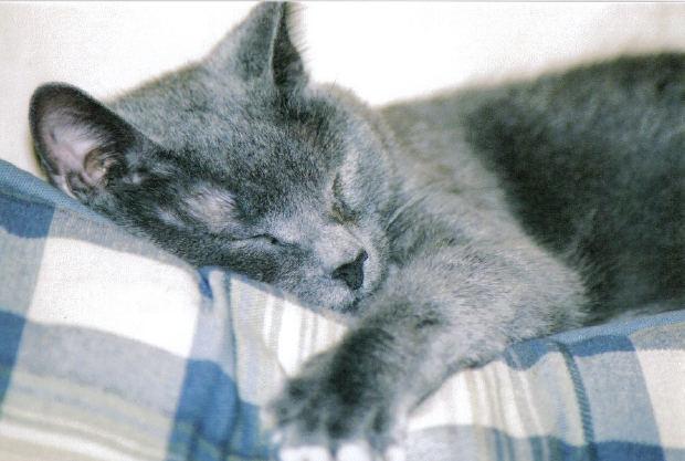 лечение кота при отравлении