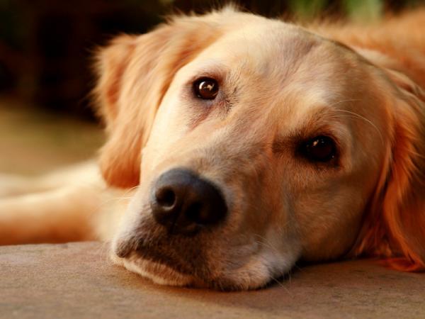 как приучить взрослую собаку клотку