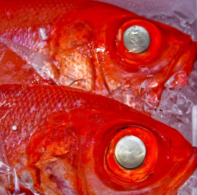 Как хранить соленую рыбу