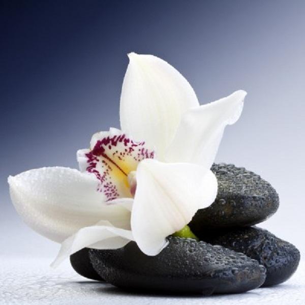 Как сплести орхидею из бисера