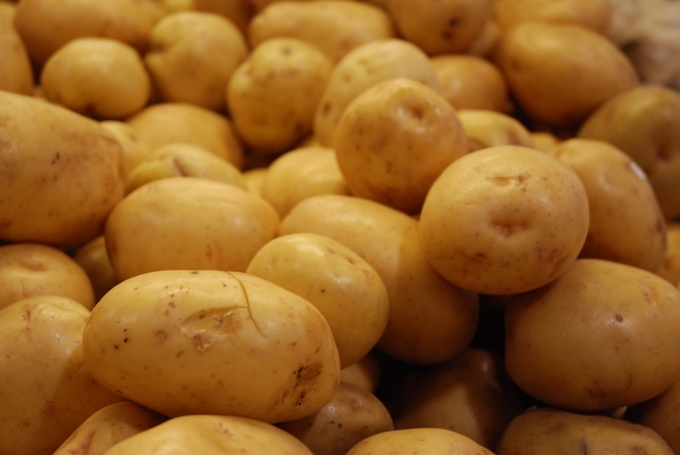 How to grow a large crop of potatoes