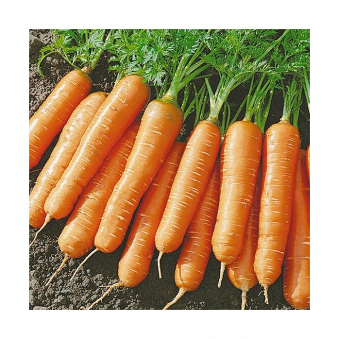 Как сохранить морковь зимой