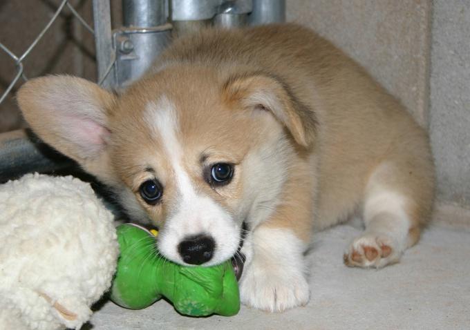 Как предпочесть кличку для щенка