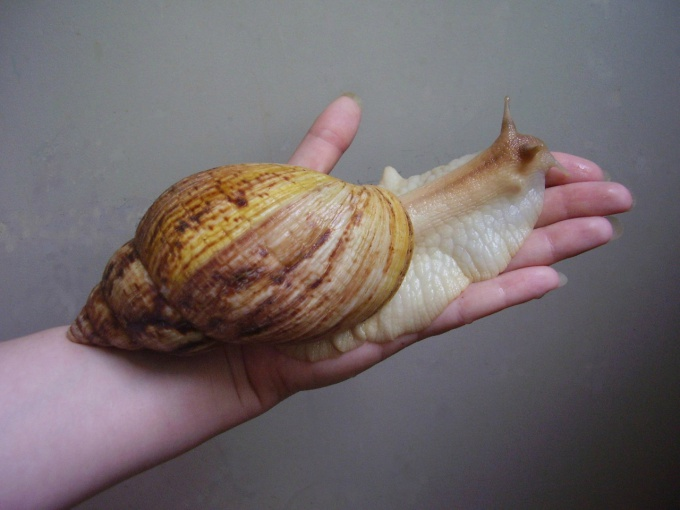 How to grow snails