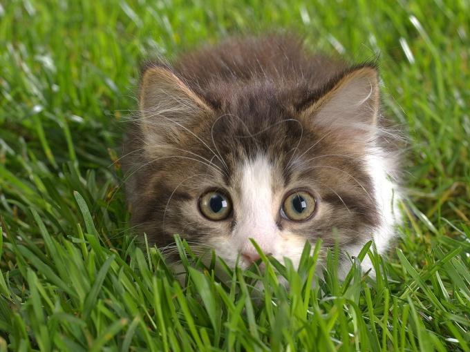 как сделать укол котенку